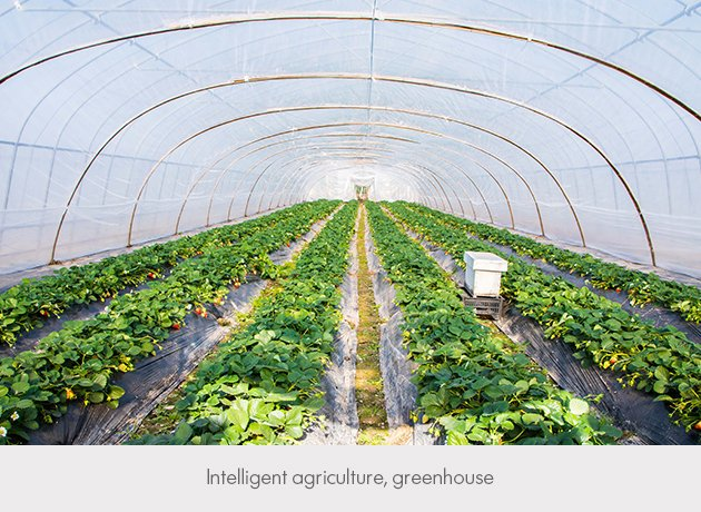 Intelligent agriculture greenhouse